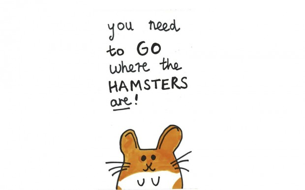 You need to go where the hamsters are!